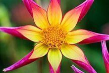 BLOSSOM LIKE A FLOWER / Flowers of every kind. / by Linda J