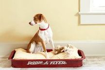 DIY Ideas: Dogs & Cats / Projects for dog and cat lovers.