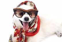 Dogs & Fashion / Style isn't just for humans.