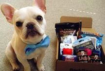 Treat Your Pet / They love gifts too.