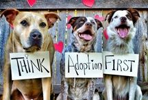 All About Animal Rescue