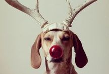 Happy Howl-idays / It's never too early to plan for the holidays.