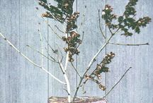 Twig and Branch / Wooden