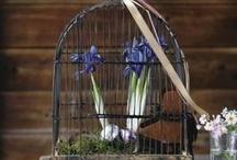 Birdcage / by renee cavin