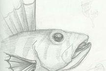 Dessin - bOmarg Art Prod / dessins d'études