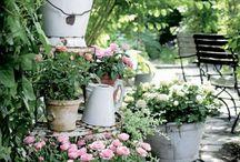 Plantes, fleurs et jardins