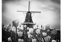 Windmills / by Malinda T