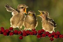 O mundo maravilhoso das aves!