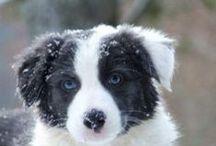 Dogs ♥ / Moi aussi je veux un petit bébé !