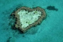 Earth heart, Cœur naturel / Discover hearts in the nature, the beauty of the language of the earth / by E M 888