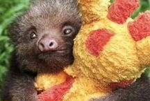 Slothing around / So, I heard you like sloths. So do I.