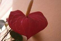 rośliny / ciekawe rośliny