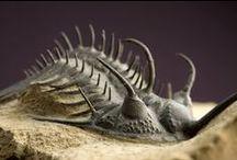paleonthology