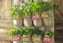 Freshly Grown / My garden dreams