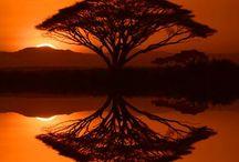 Landschap/zon/maan/trees