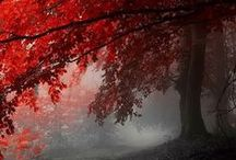 Wow God's Scenery! / The Great Outdoors, trees, leaves and feathers