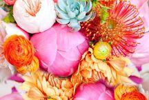 Květy  kytky  kytičky