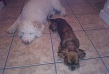 SURI Y LUSCO / Fotos de dos perros especiales