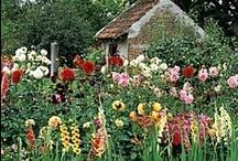 Garden & Landscape Planning