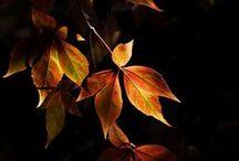 Blad och löv 1