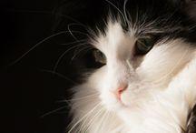 Katter 1