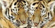 Animal Love / Who doesn't love animals? Especially baby animals.  #Animals #TrinityFlorida #SailwindsRealty #ToniWeidman #TrinityToni #AnimalLove