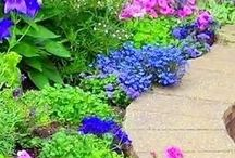 Gardens / Gardening is so satisfying and produces magical results. We both love it.  Enjoy the gardens here. #gardens #Gardening #Real Estate #ToniWeidman http://toniweidman.com #Flowers #Gardens #SailwindsRealty
