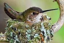 Hummingbirds / Tiny but mighty pretty! We feed them in our backyard. Toni Weidman, Trinity, Fl. #Hummingbirds www.weidmanteam.com Sailwinds Realty #trinitytoni