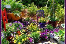 Disney World Flower & Garden Show / Disney World Orlando-Flower and Garden Show at Epcot. #DisneyWorld #OrlandoFl. ToniWeidman.com