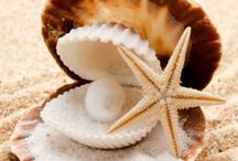 Seashells & Sea Creatures / The art of seashells. So many of us love to collect them! #Seashells