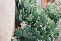 green in the home / beautiful photographs of house plants, leaves, branches, trees, flora, cactus, ferns, aloe, bamboo, palms, topiary, gardens, balconies, window boxes, windows, back garden, front garden, shared garden, allotment, walls, benches, seating, lighting, patio, stones, rocks, Japanese garden