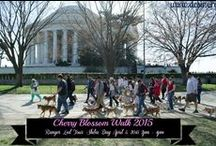 Past Events / Learn about upcoming opportunities to meet DC SIR's adoptable dogs and view photos from past events.