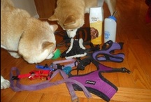 """Thank You! / DC SIR has an """"Amazon Wish List"""" of items needed for our foster dogs. We would like to thank all of our donors for helping our dogs!"""