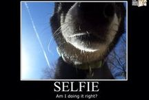 """Demotivational Wednesdays / We will be bringing you weekly 'Demotivational Shiba Posters"""" every Wednesday at noon, on Facebook, Twitter and Pinterest, to help you get over the mid-week slump. Enjoy and Share!"""