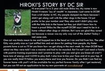 """Hiroki - Adopted! / Hi everyone! I'm a 3 year old male Shiba Inu. My name is now Hiroki! It means """"joy of wealth"""" in Japanese. I just came to DCSIR from a kill shelter in NC."""