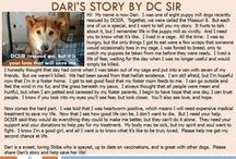 Dari - Adopted! / Hi! My name is now Dari. I was one of eight puppy mill dogs recently rescued by DCSIR. Together, we were called the Missouri 8. But each one of us is special, and I want to tell you my story.
