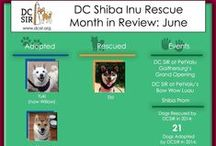 Month in Review / Check out what DCSIR has been up to each month!
