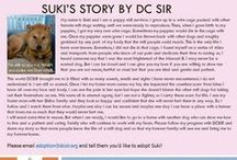 Suki - Adopted! / My name is Suki and I am a puppy mill survivor.
