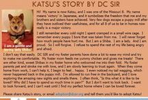 Katsu - Adopted! / Hi! My name is now Katsu, and I was one of the Missouri 8. My name means 'victory' in Japanese, and it symbolizes the freedom that me and my brothers and sisters have achieved.