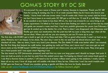 Goma - Adopted! / Shiba Inu - 13 yr Male - Sesame
