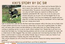 Kiki - Adopted! / Kiki is a 4 month old Black & Tan Shiba Inu