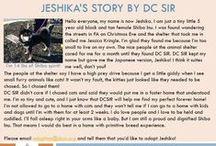 Jeshika - Adopted! / Black and Tan - 5 yr - Female