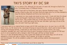 Tiki - Adopted! / Tiki - Shiba Inu - Female - Sesame - 1 yr 4 mo