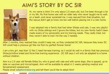 Aimi - Adopted! / Shiba Inu - Female - Red 2.5 yrs