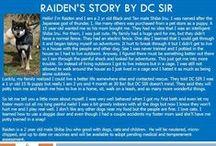 Raiden - Adopted! / Shiba Inu - Male - Black and Tan - 2 yr