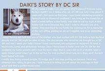 Daiki - Adopted! / Male - Red Shiba Inu - Senior