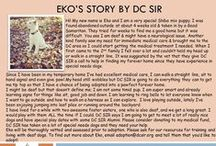 Eko - Adopted! / Shiba Inu/Jindo puppy - 4 mo old - female - special needs