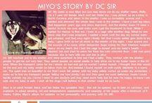Miyo - Adopted! / Shiba Inu - Female Black and Tan
