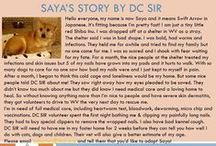 Saya - Adopted! / Female - Red Shiba Inu - Adult - Follow her story here: http://on.fb.me/1RW0r6x