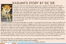 Kasumii - Adopted! / 6 yr - Shiba Inu - Female - Red